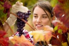 grapeharvestgirl22-scaled